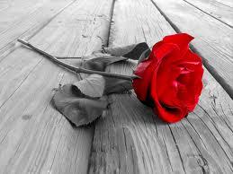 i-0df4c1497820ca4764bbcd707209abb0-rose.jpeg